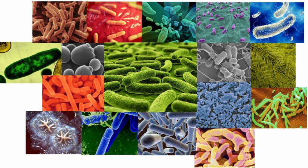 Бактерии для септика и туалета
